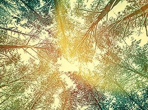 Rooting Spirit in Humanity