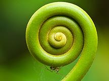 Full Circle Enlightenment