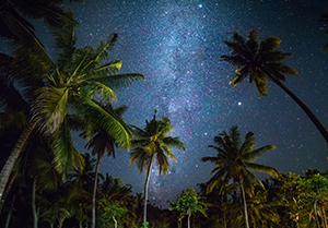 Palm trees at night with stars